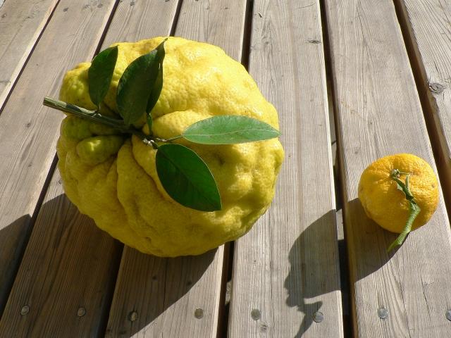 柚子を使ってダイエットができる?話題の柚子が持つ効果・効能とは?