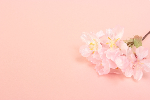 宇治市の桜の名所はどんな所?ぜひおススメしたい桜のスポット