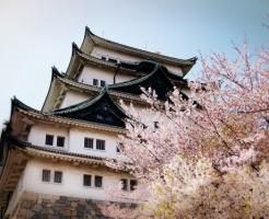 桜,名所,名古屋