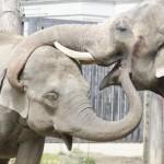 王子動物園を割引で入るには?赤ちゃん連れで楽しむこともできる?