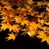 鎌倉の紅葉☆ライトアップされてキレイなおすすめスポットと言えば?