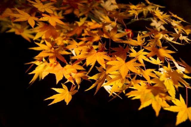 鎌倉 紅葉 ライトアップ